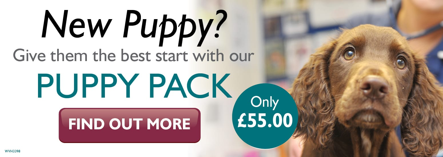 Puppy Pack covering puppy injections, flea & worm treatment and much more at Orford Lane Vets in Warrington