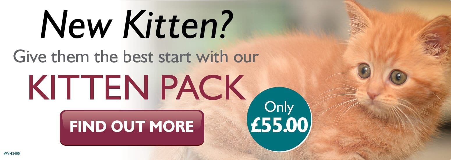 Kitten Pack covering kitten injections, flea & worm treatment, and much more at Orford Lane Vets in Warrington
